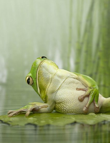 Frog holding belly as though having a stomach ache